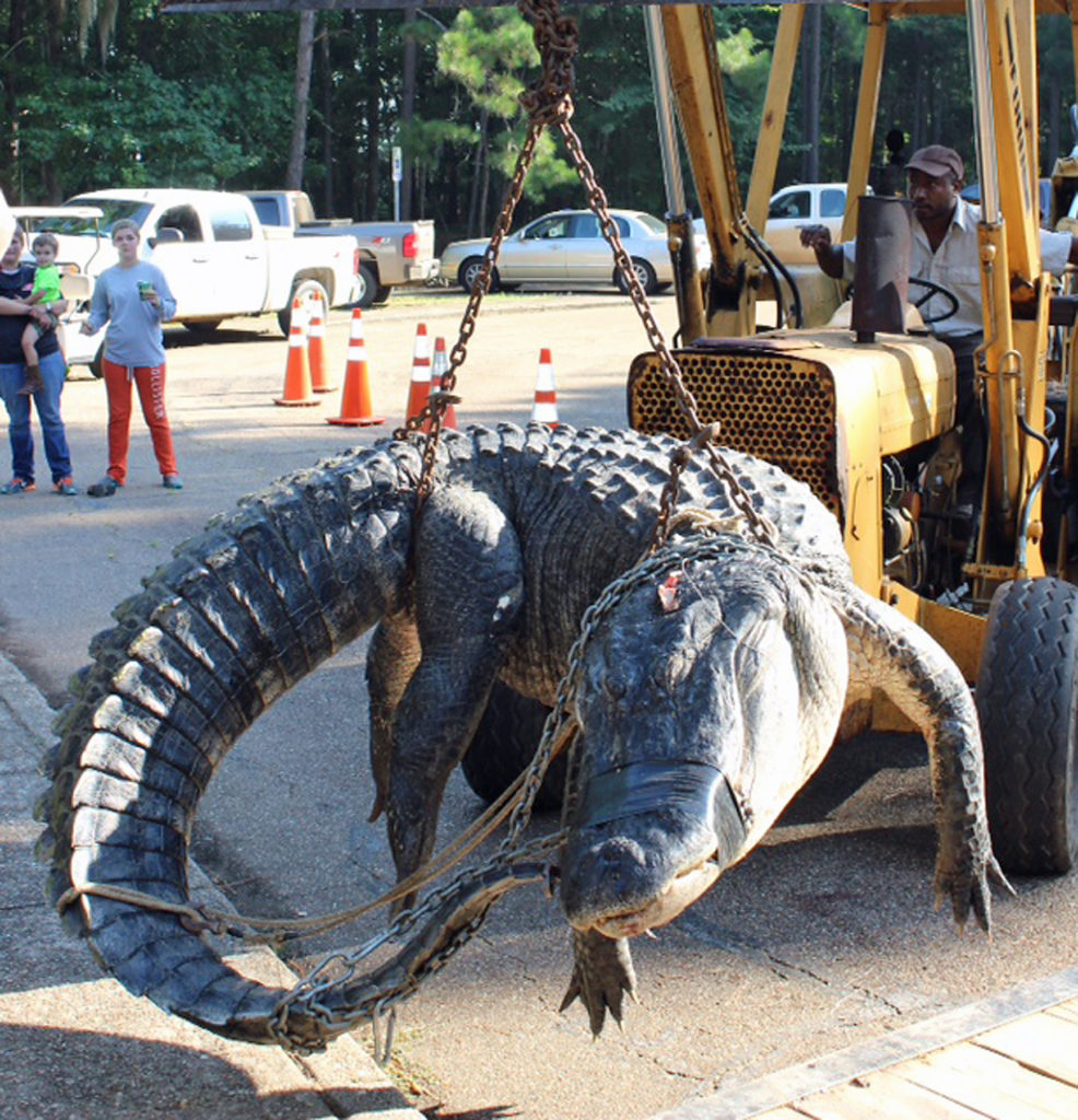 aa9ca0f90624d (David Rainer, James Lawler) A new Coastal Zone below I-10 has been added  for the 2019 Alabama alligator season to tap into an underutilized gator ...